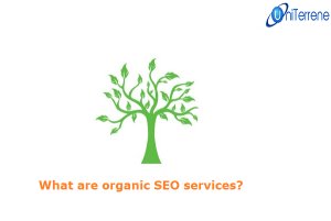 what-are-organic-SEO-services